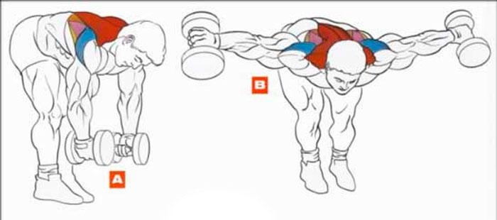 Упражнение для мышц плечевого пояса и задних пучков дельт