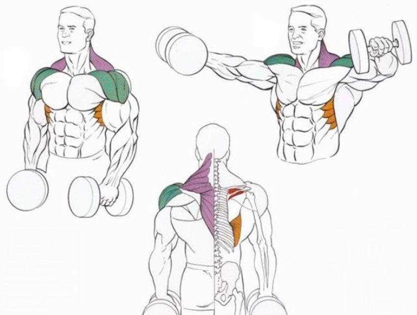 Почему плечи часто травмируются
