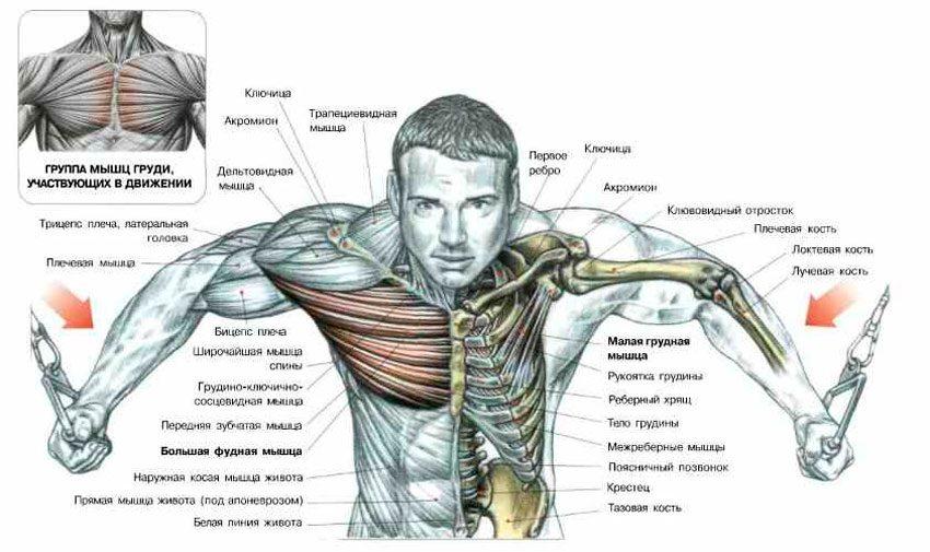 Анатомия упражнения