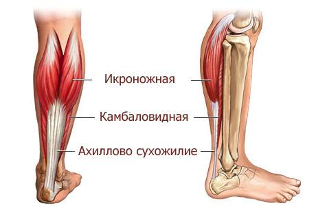 Подробнее об анатомии