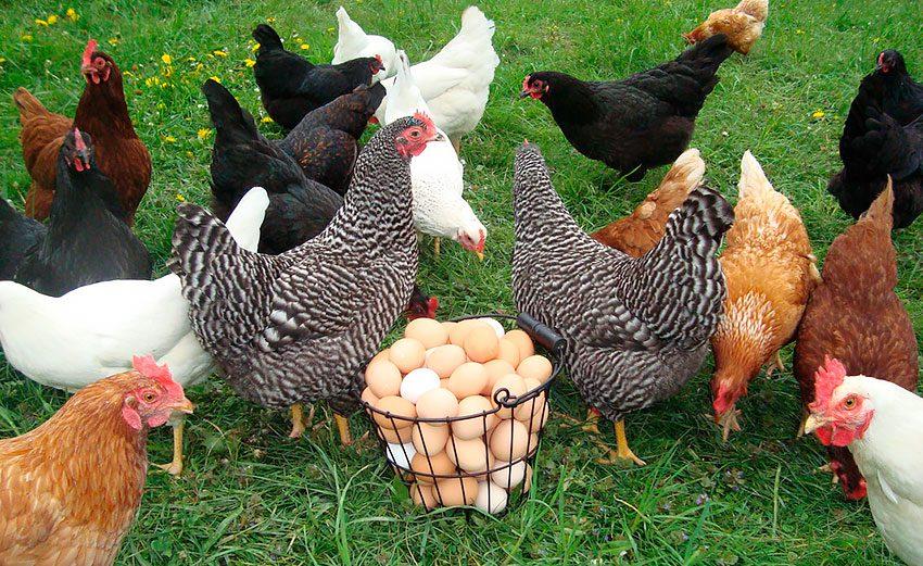 Яйца на завтрак польза и вред