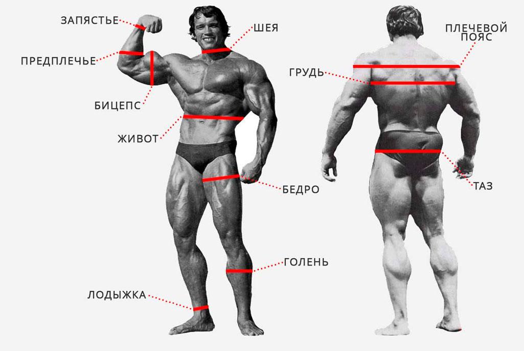 Пропорции тела бб — pic 14