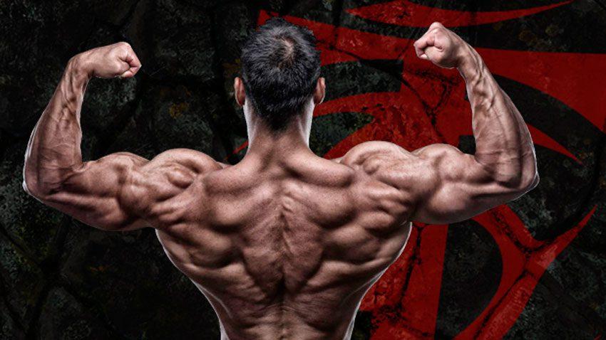 Тренировка спины и бицепса в один день