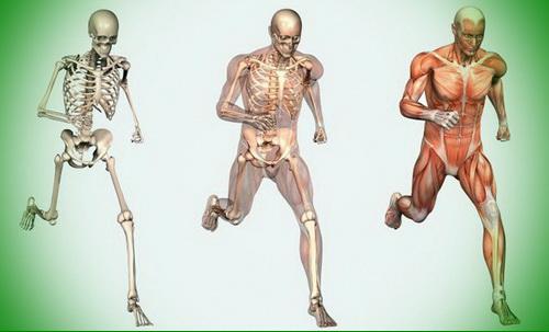 Здоровые кости и суставы