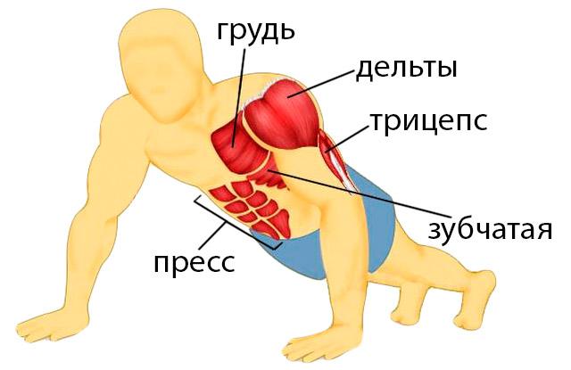 Отжимания от пола — какие мышцы качаются