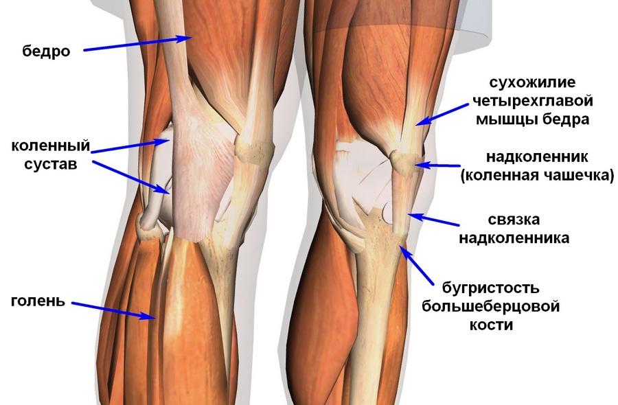 Жировые тела в коленном суставе анатомия аппликатор артростин для суставов