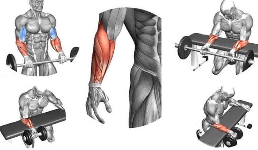 Упражнения для тренировки предплечий