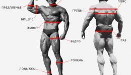 Замеры тела в бодибилдинге