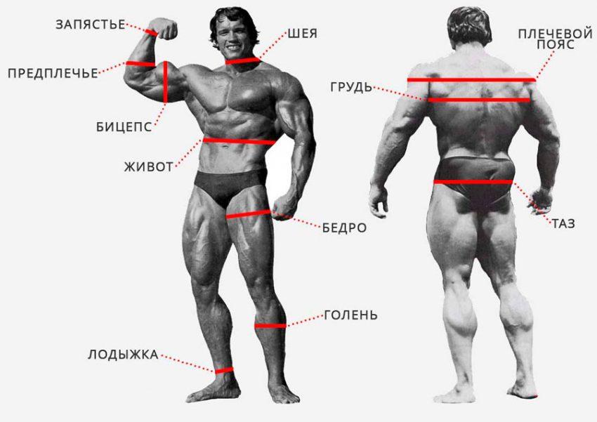 Таблица замеров тела при похудении – Замеры тела при похудении — таблица и правила заполнения