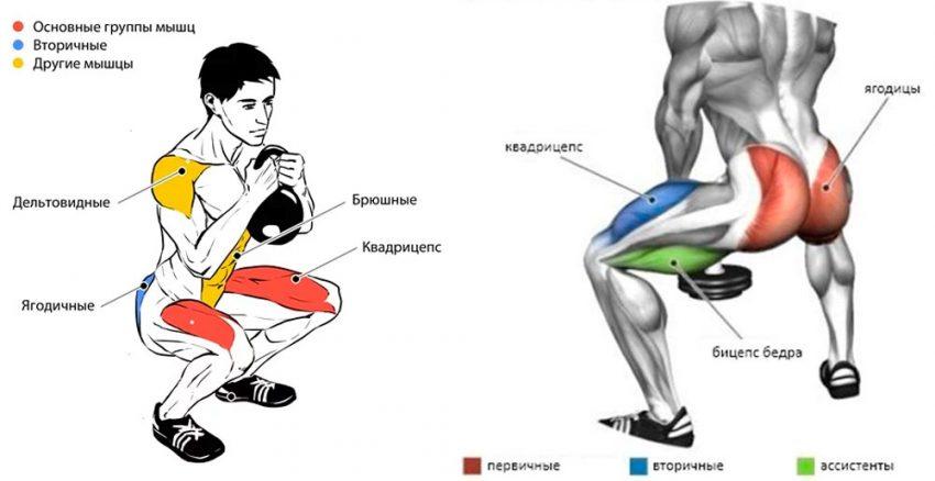 Какие мышцы работают в гоблет-приседе