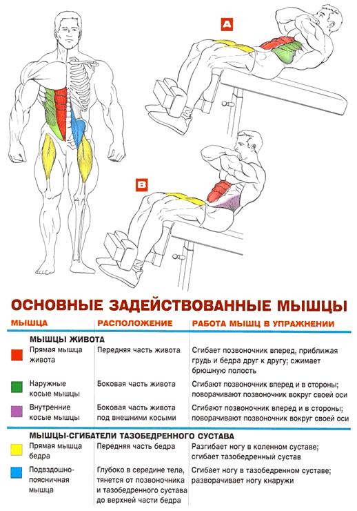Упражнения на скамье для пресса в домашних условиях