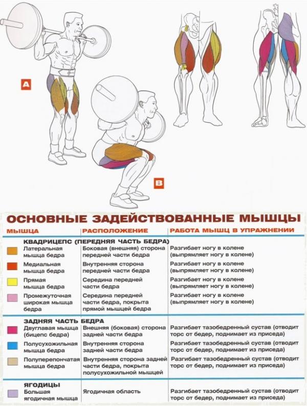 Как накачать мышцы ног в домашних условиях за месяц
