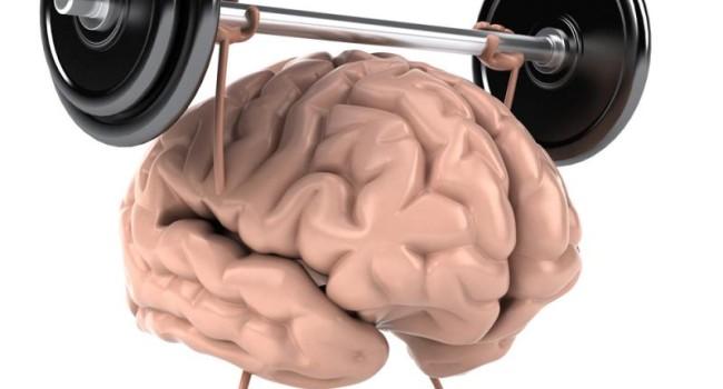 мозг-мышцы