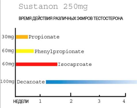 Сустанон или тестен курс кленбутерола 40млг