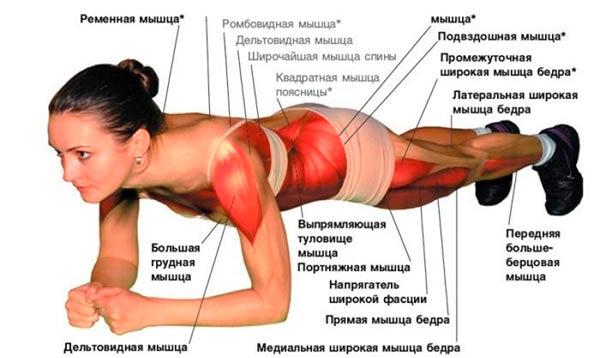 планка как правильно делать чтобы похудеть