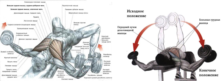 Упражнения для грудной мышцы домашние условия - Как быстро накачать мышцы дома. Видео