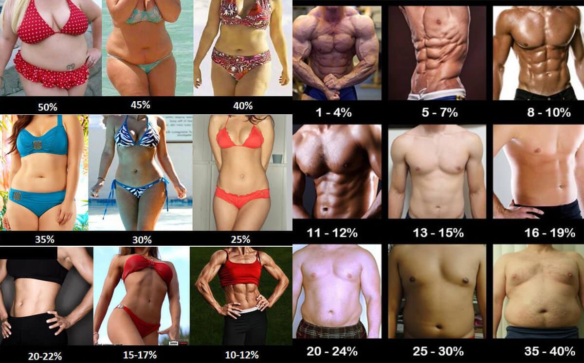 процент жира живот
