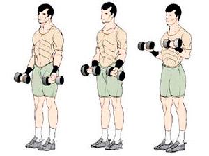 Программа тренировок на месяц