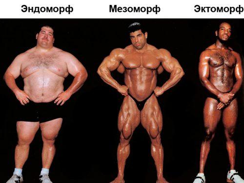 Программа тренировок для мезоморфа