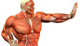 Типы мышечных волокон