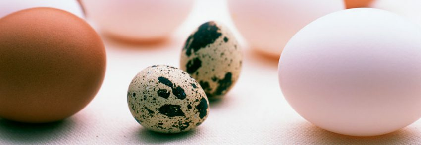 Куриные и перепелиные яйца